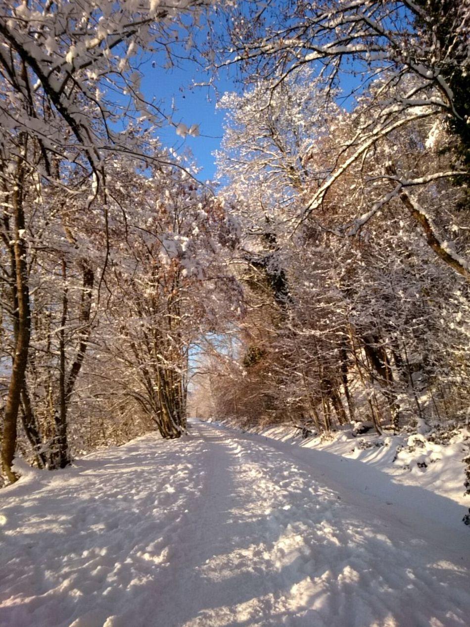 a beautyful winter morning... Wintermorning Winter 2017 Snow ❄ Winter Schnee Winterwald Winter Landscape Wintertime ⛄ Winterday Schwarzwaldliebe
