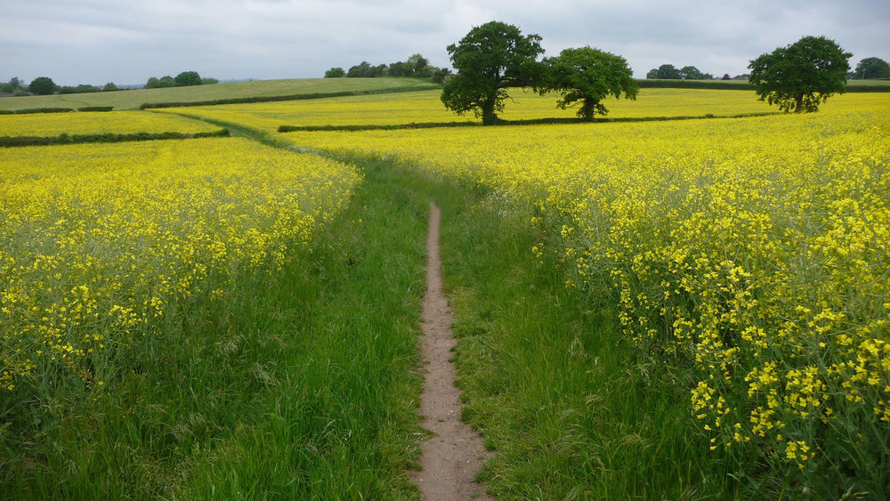 Bromsgrove England, UK Agriculture Beauty In Nature Crop  Cultivated Land Day Farm Field Growth Landscape Nature No People Oilseed Rape Outdoors Plant Rural Scene Scenics Sky Tranquil Scene Tranquility Tree Worcestershire Yellow
