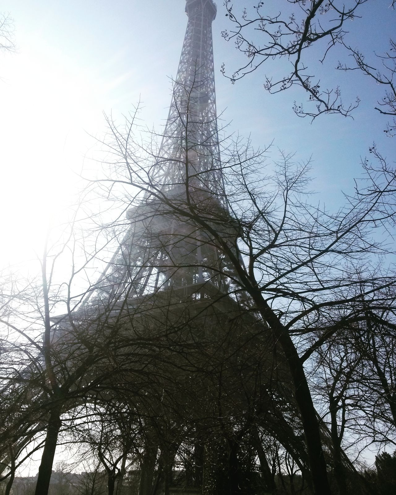 Sky France Eiffel Tower Tree Low Angle View Paris Branch Day Built Structure Outdoors Travel Destinations Cloud - Sky Building Exterior Historical Building Architecture Travel Photography Tourist Attraction  Tourism Travel Art Tourist Attraction  Winter Wintertime Winter Trees