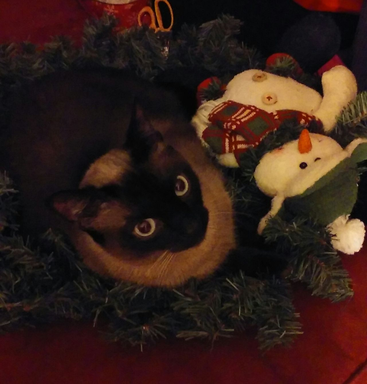 cat in wreath Siamese Wreathed Cat Ringer Snowman And His Cat Christmas Decorations Celebration