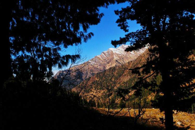 KheerGanga, Himachal Pradesh Tree Mountain No People Sky Nature Outdoors Landscape Tree Area Beauty In Nature Scenics