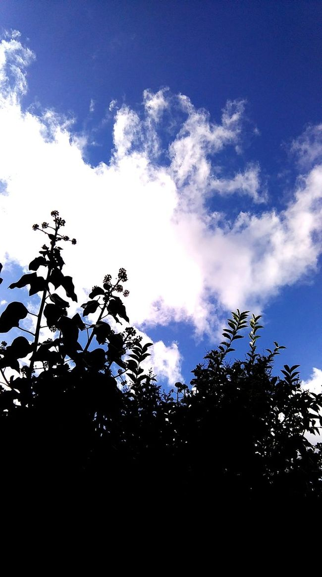 Low Angle View Outdoors Cloud - Sky Clouds Tree Sky Lookingup Whiteclouds Bluesky Plant Contrast
