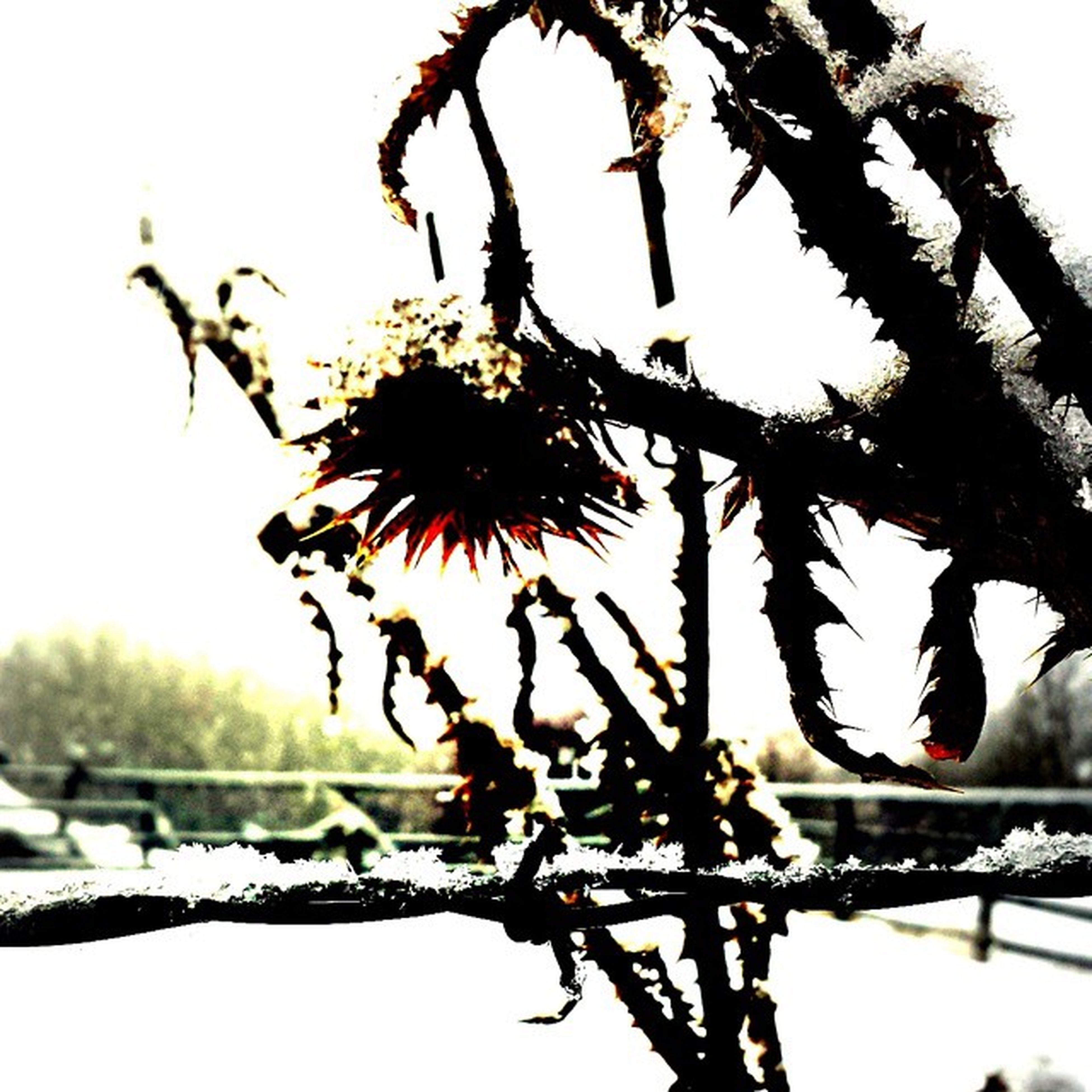 branch, focus on foreground, close-up, nature, sky, dry, clear sky, tree, silhouette, bare tree, outdoors, dead plant, tranquility, no people, beauty in nature, winter, day, growth, twig, low angle view