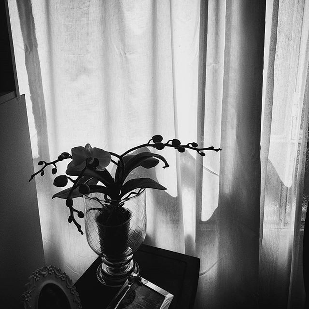 Life Flowers Orquídea Shadows Light Blackandwhite Bng B &w Sunnydayswillcome Sunnydays Sunday Easter Faded_world Faded Mysquarehere Windowswithaview Laliphotography Enjoyit Igers Igersoftheday