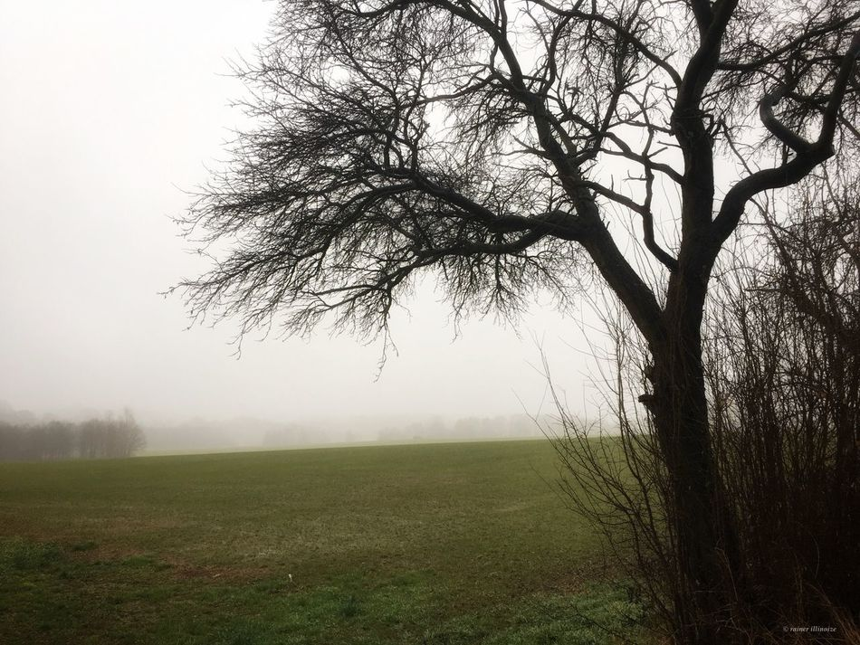 Hirschgrund Tree Landscape Nature Outdoors Fog Weather Oberlungwitz Taking Photos Relaxing December Field Taking Pictures Enjoying Life Beauty In Nature Germany Tranquility Tranquil Scene Beauty In Nature