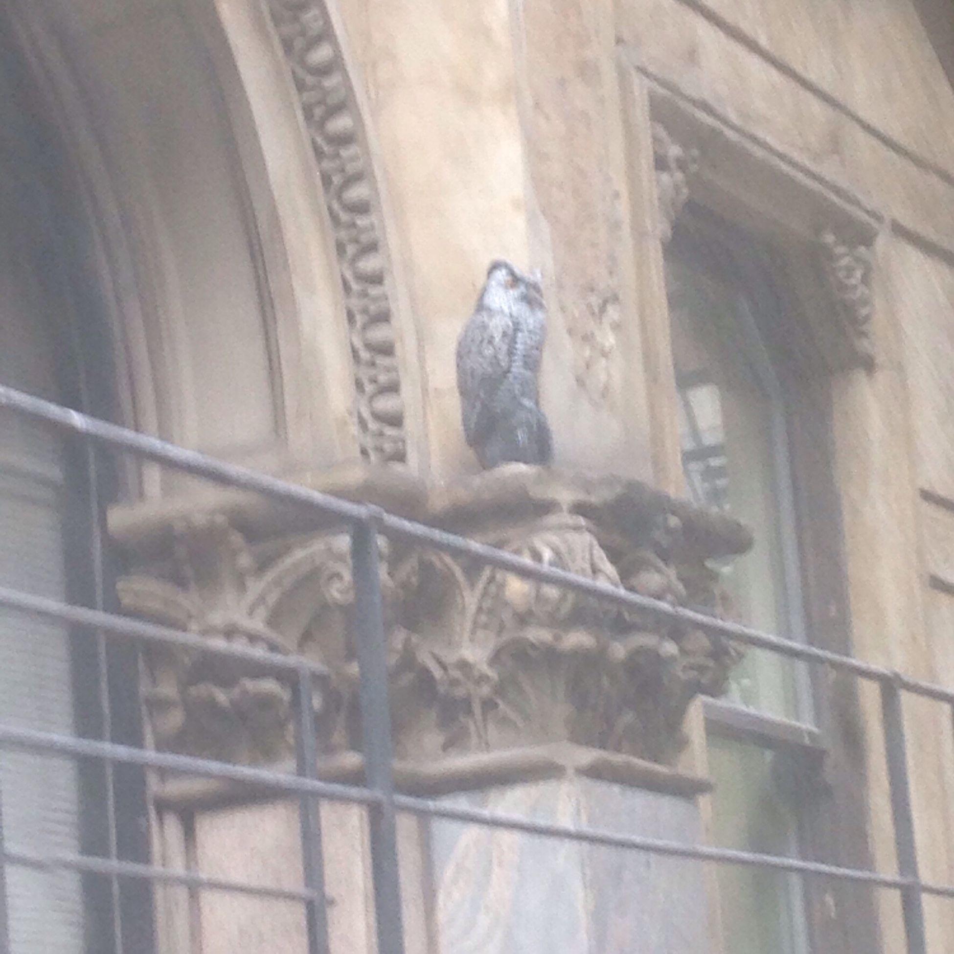 Washington Block Building. Owl to scare away pigeons. Loop Landmark Architecture