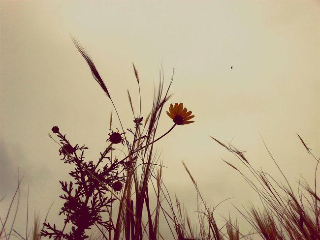 OpenEdit Daisy Bird Photography Summer ☀ Sport Time Pictureoftheday EyeEm Best Edits EyeEm Nature Lover Nature Photography Captured Moment