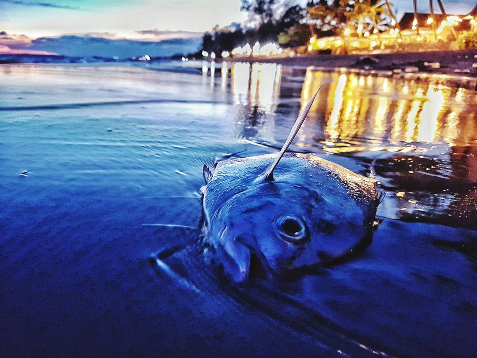 Contrast of a dead fish ashore and colorful evening light at sunset Water Reflection Nature Sunset Details Of Nature Fish Ocean Life Marine Marine Life Dead Fısh Poluted Earth Ecology Contrast EyeEm Best Edits Week On Eyeem Beach Colors Sea Blue Hues Blue Color Tones