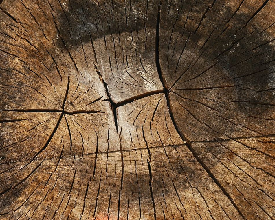 Wood... Full Frame Backgrounds Textured  Nature No People Close-up Day Outdoors Tree Trunk