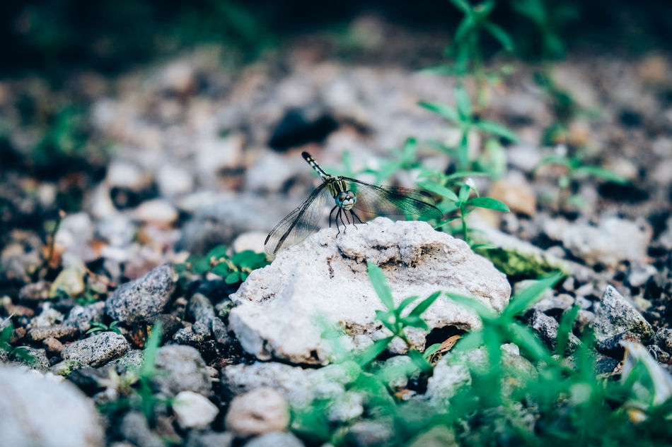 Animal Themes Animal Wildlife Animals In The Wild Arthropoda Beauty In Nature Close-up Damselfly Day Dragonfly Fly Insect Nature No People One Animal Outdoors Relaxing Resting Zygoptera