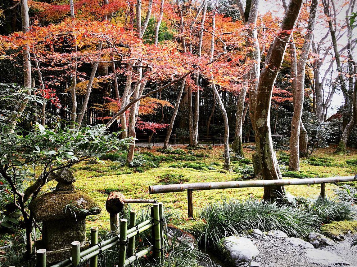 祇王寺 嵯峨野 京都 Kyoto Japanese Garden Kyoto Autumn Autumn Colors Travel Destinations Beauty In Nature Relaxing Kyoto, Japan Enjoying Life Autumn Leaves
