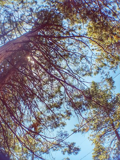 A View From Below Outdoor Photography Nature Photography Beauty In Nature ForTheLoveOfPhotography Fresh On Eyeem  From My Point Of View Perspective Fine Art Photography Abstract Outdoors Nature Tree Photography Woods EyeEm Abundance Eye4photography