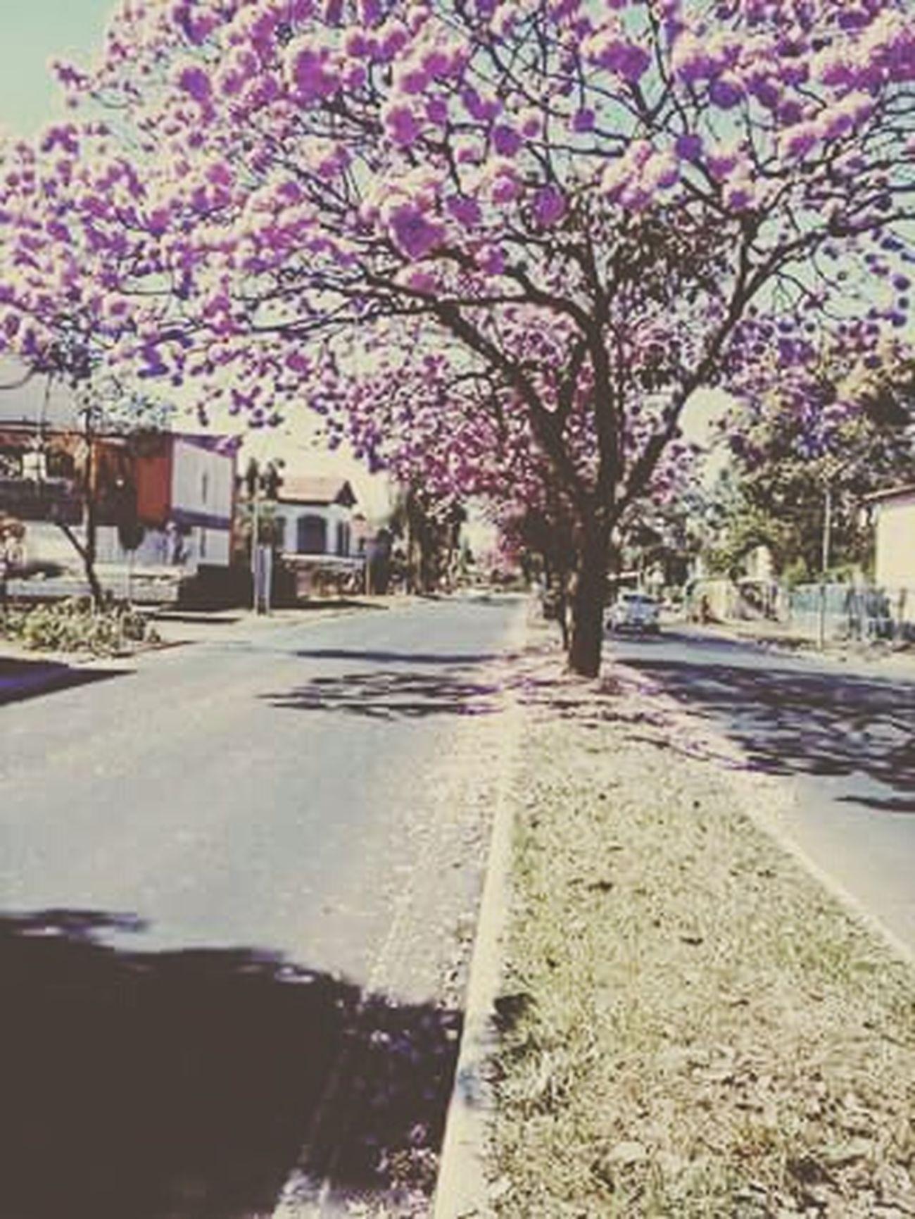Minha Brasília Brasil Brasil ♥ Amor Brasília - Brazil Love Paisagens ❤