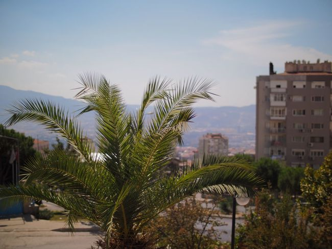 View from a Lovely cafe Building Exterior Palm Tree Tree Built Structure Architecture Sky Growth City Focus On Foreground Cloud Day Outdoors No People Cloud - Sky Green Color Tall - High Freshness Shallow Depth Of Field Cafe Izmir Izmir Turkey Izmir/ Bornova