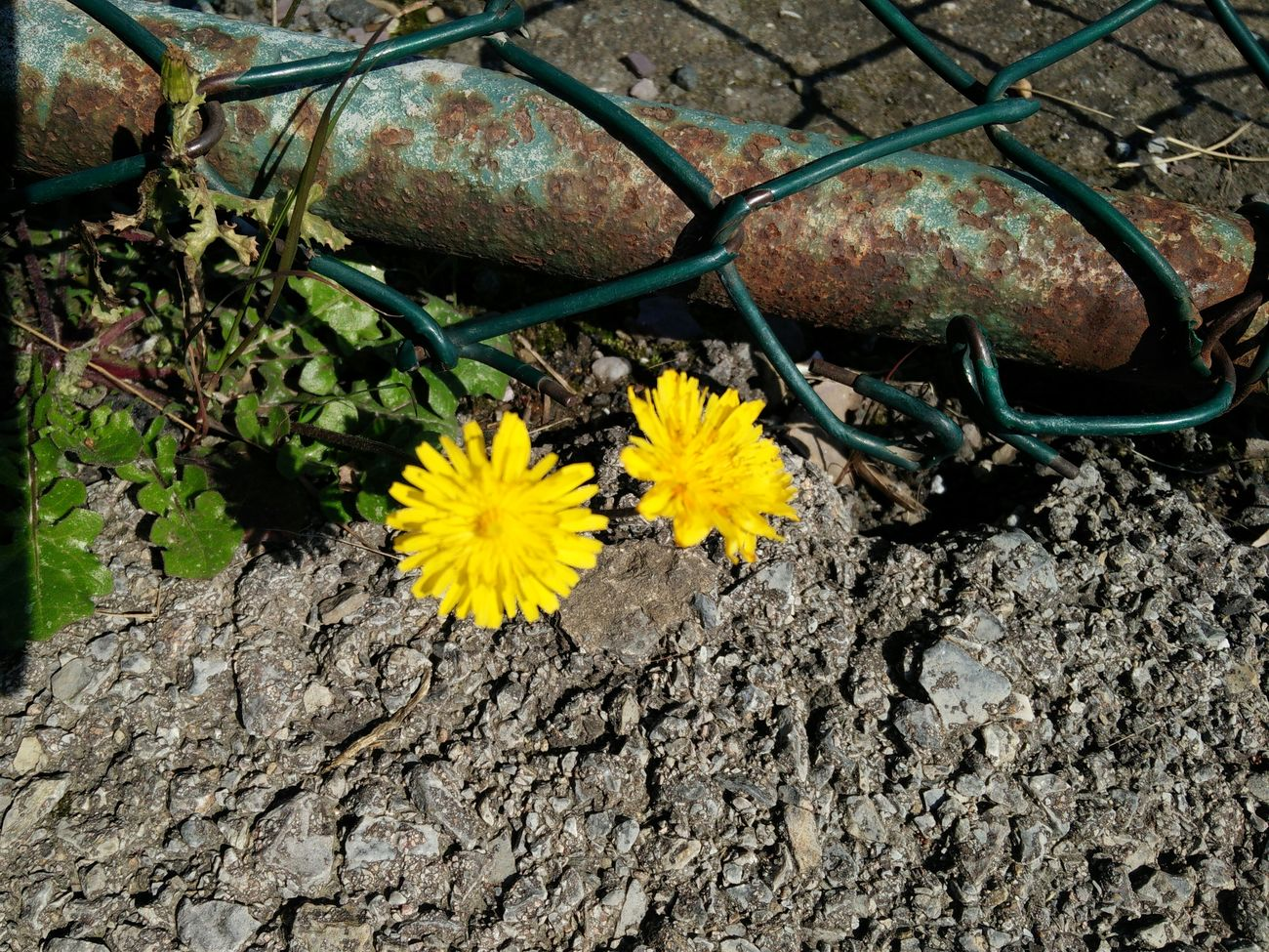 Flowers in The City :( Unhappy flowers.... Taking Photos Flowers EyeEm Nature Lover City Life Beautiful Yellow Flower Unhappy Unhappy Flowers