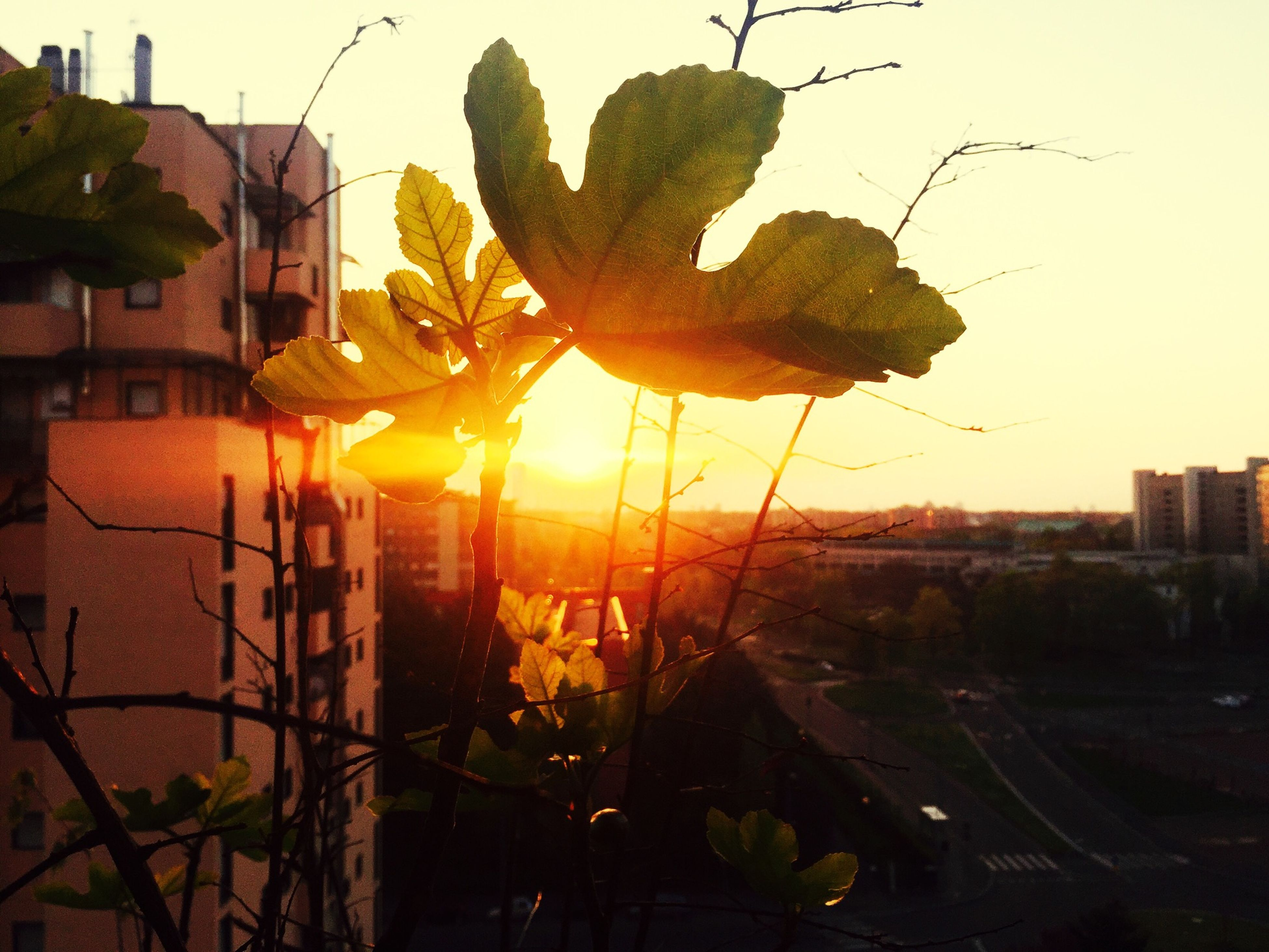 flower, architecture, built structure, sun, building exterior, growth, sunlight, plant, sky, fragility, sunset, nature, sunbeam, clear sky, no people, freshness, tree, close-up, outdoors, beauty in nature