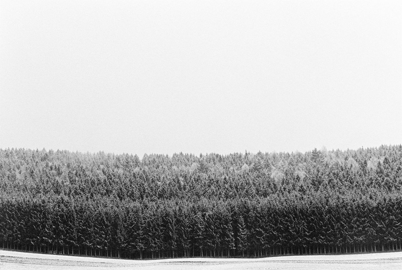 Field Rural Scene Agriculture Farm Nature Crop  Clear Sky Tranquility Growth No People Landscape Cereal Plant Tranquil Scene Outdoors Day Scenics Beauty In Nature Sky Wheat Trees Nature Film Photography Analogue Photography Filmisnotdead Blackandwhite