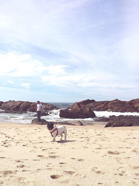Babydog Frenchbulldog Beachmoments