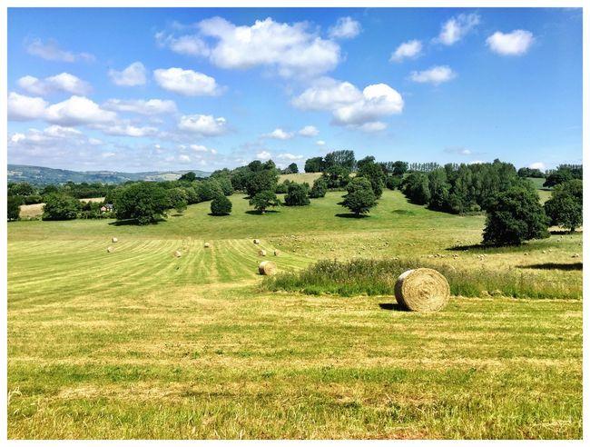 English Summer Berrington Hall, Herefordshire UK