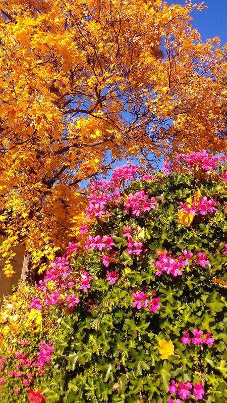 Flower Photography Yellow Tree Sunny Day Explore Latvia