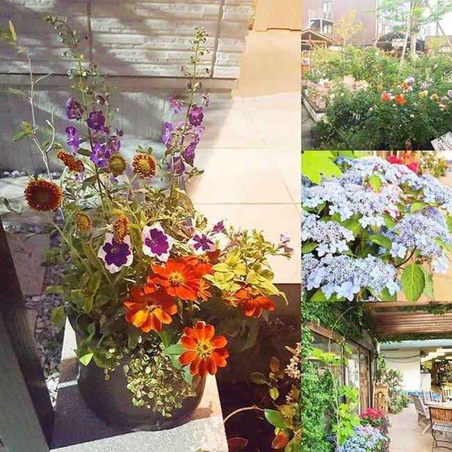 グリーンギャラリーガーデンズ 前年度寄せ植えグランプリの方に 寄せ植え 植えていただきました! いいかんじ 空いていた花台に早速セット Nice です!