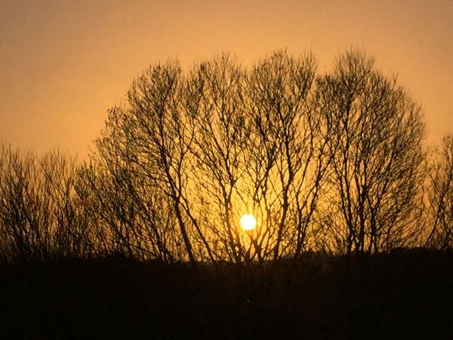 Sunset Golden Hour Winter Trees IPhoneography Iphone6 Ireland