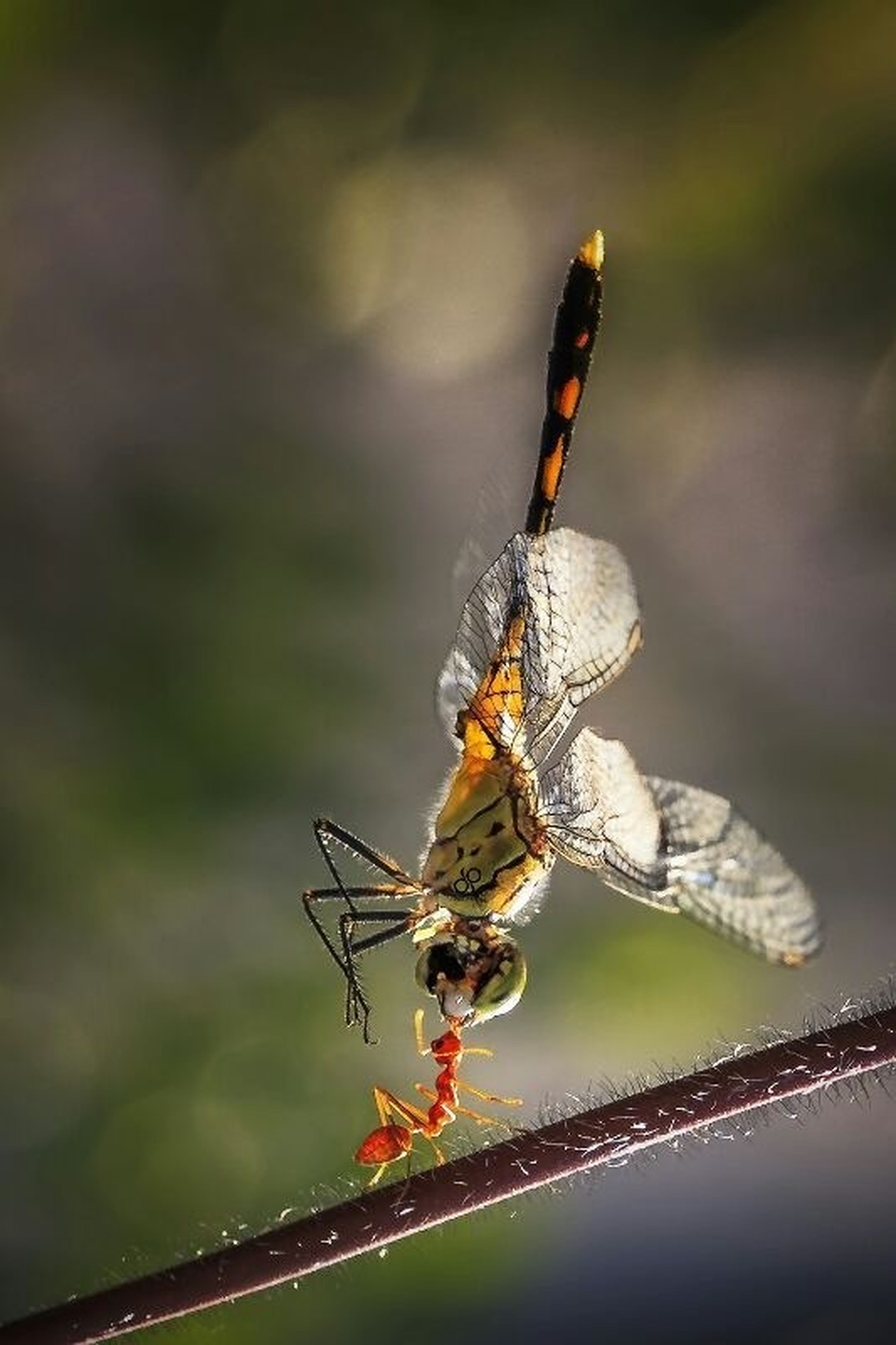 Makro Dragonflies And Ants Flowers Composition