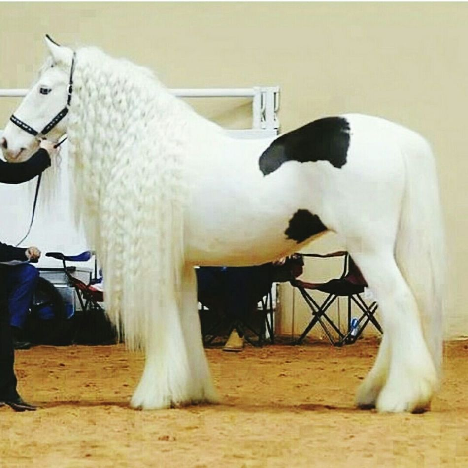 Here's my horse 😜 Beautiful Awesome