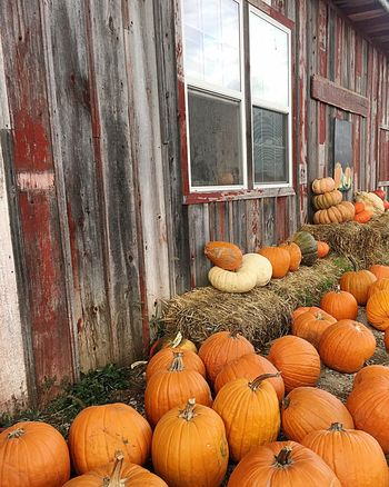 Pumpkin Halloween Autumn Vegetable Farm House Straw Agriculture Barn Window Wood - Material No People Building Exterior
