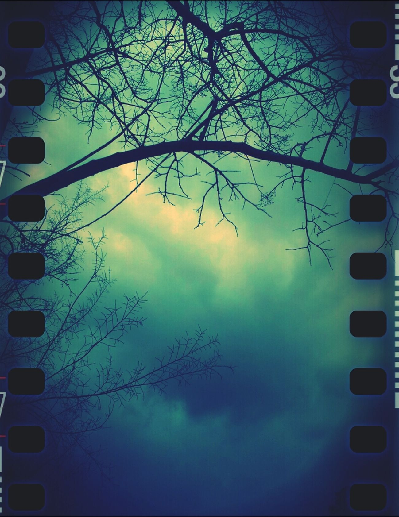 Sky Trees Taking Photos Winter Blue Cloud Storm Photography Outdoors Branches Cold Days Today's Weather Report Jus Because