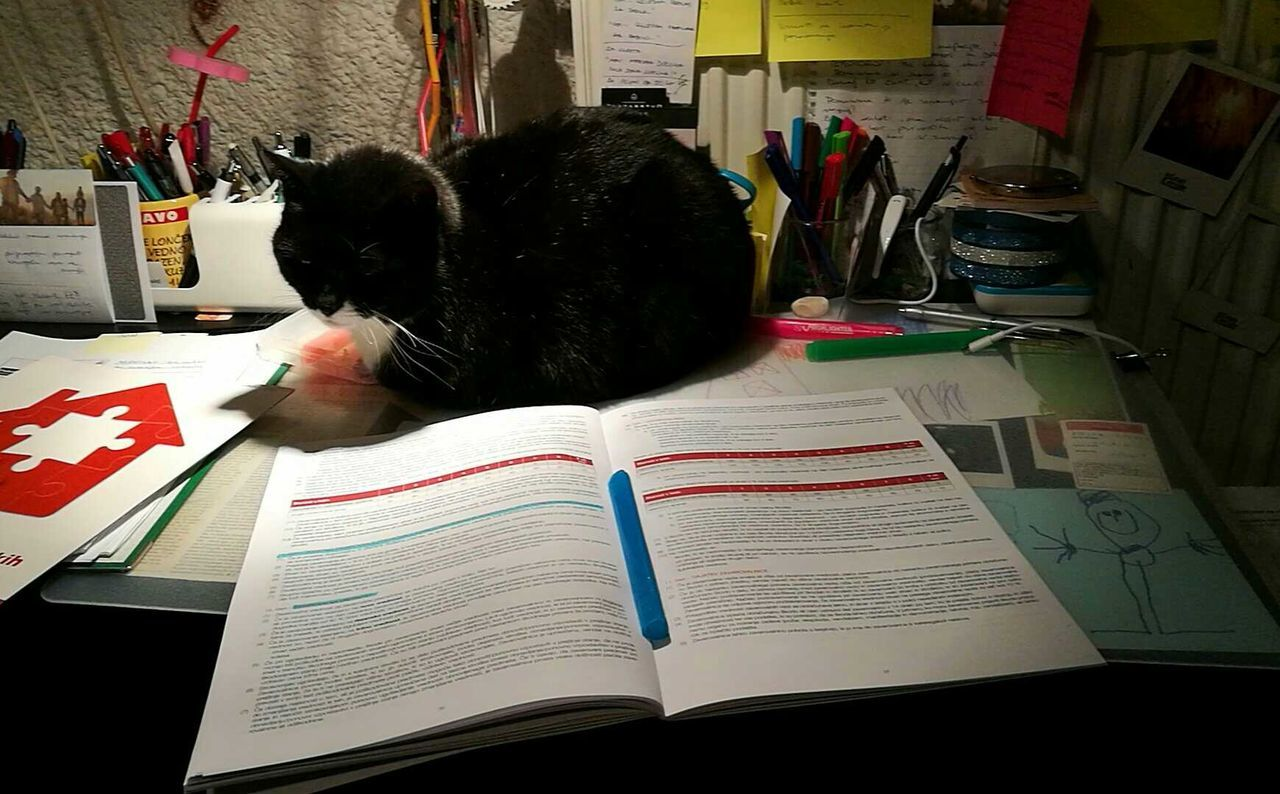 book, indoors, desk, education, domestic cat, mammal, animal themes, learning, paper, domestic animals, pets, real people, day, one person, bookshelf