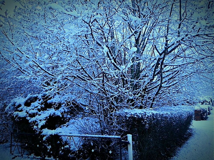 EyeEm Nature Lover Getting Inspired Photography Snow Cold Outside Natureloversl Landscape Justsnapped