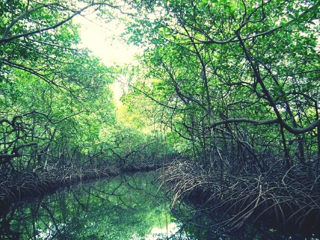 Green Enjoying The View Enjoying Nature Love Tunnel