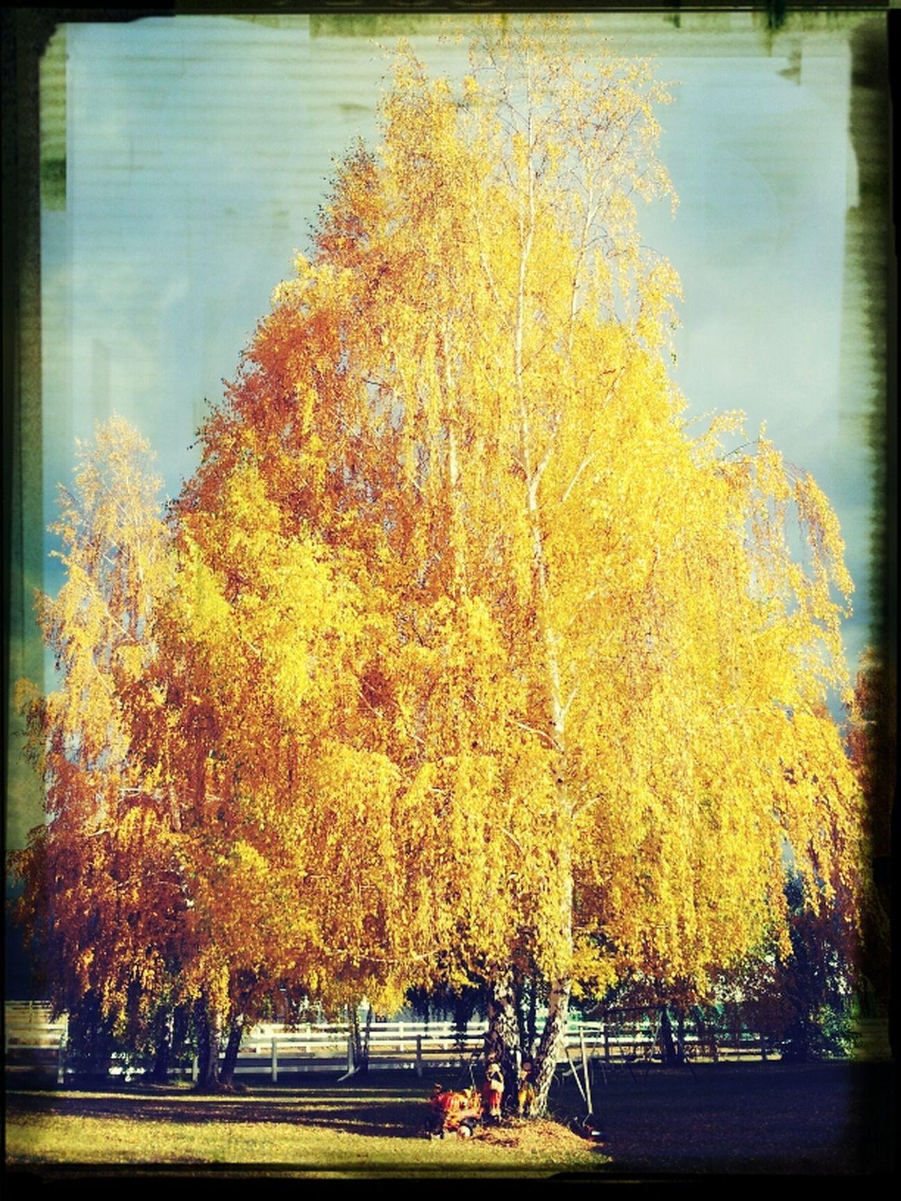crisp air. ....warm colors. Fall is among us