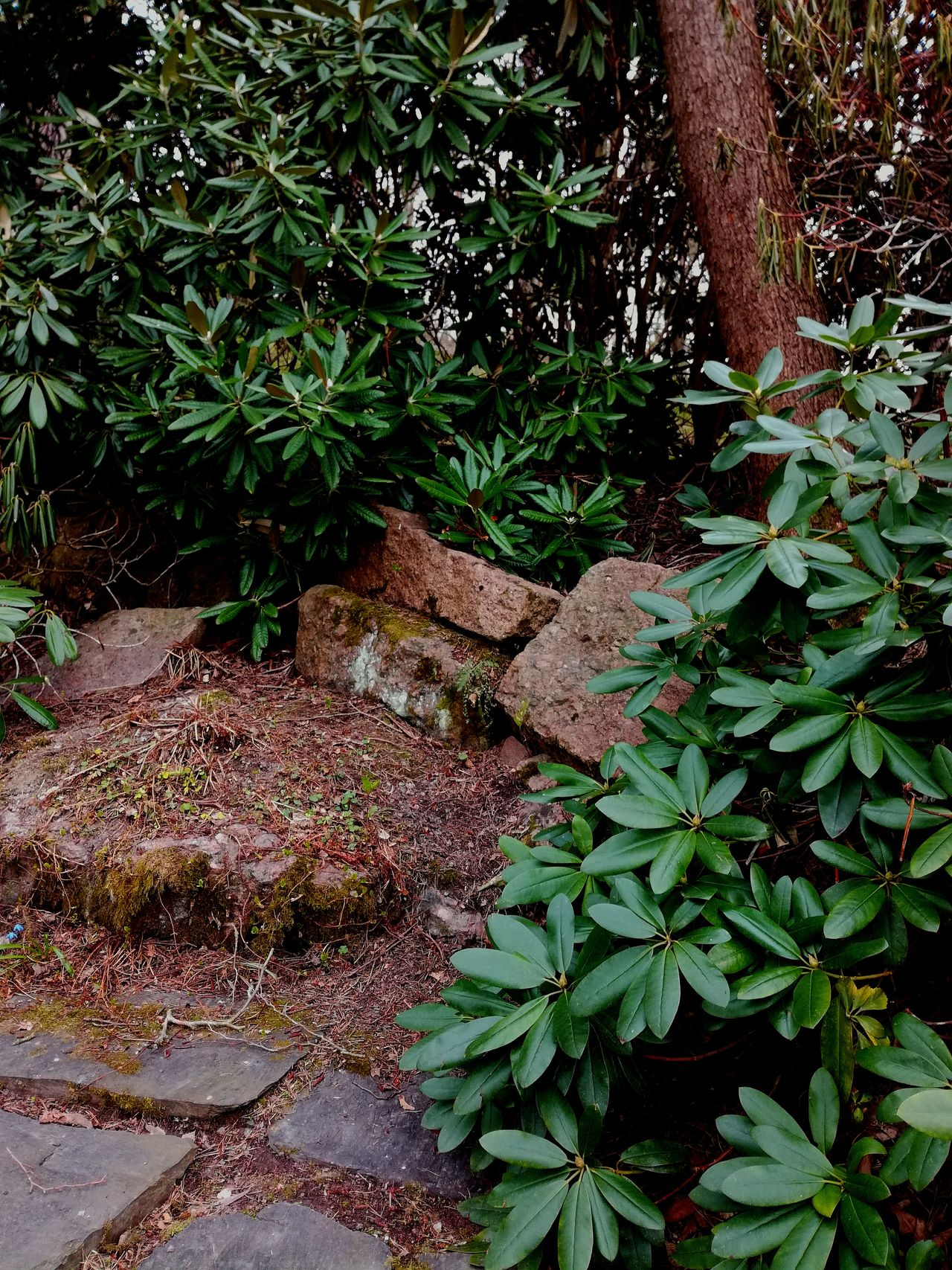 Nature Tree Outdoors Green Color Leaf Beauty In Nature No People Plant Close-up Finland Springtime Outdoors Photograpghy  Mossy Stone Rhododendron Stones Park Japanese Style