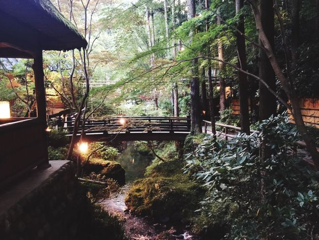 Japan Tranquility Outdoors Nature First Eyeem Photo