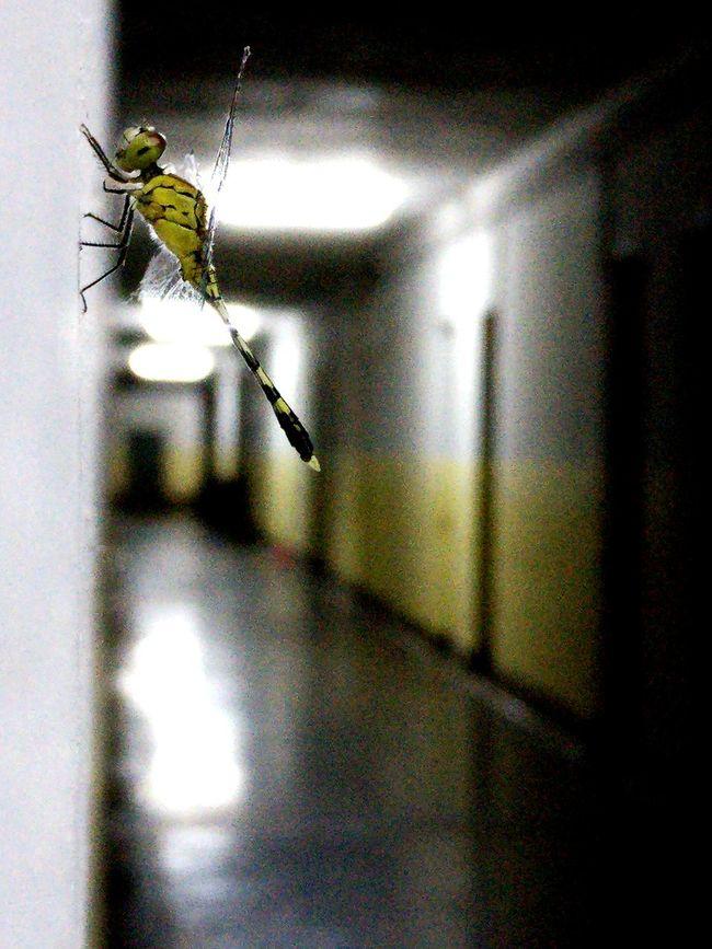 Insect Dragonfly Mobilephotography Long Corridor Empty Corridor Corridor Hostel Relaxing Takingpictures