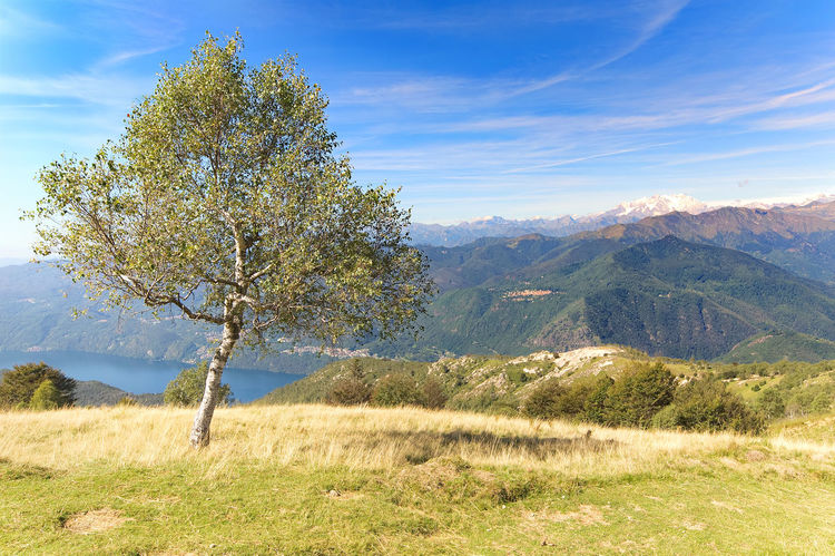 View of Monte Rosa from the top of Mottarone - Stresa - Piedmont - Italy Cloud Monte Rosa Mottarone Orta  Stresa Alps Beauty In Nature Day Grass Growth Italy Landscape Meadow Monte Mountain Mountain Range Nature No People Outdoors Piedmont Scenics Sky Tranquil Scene Tranquility Tree