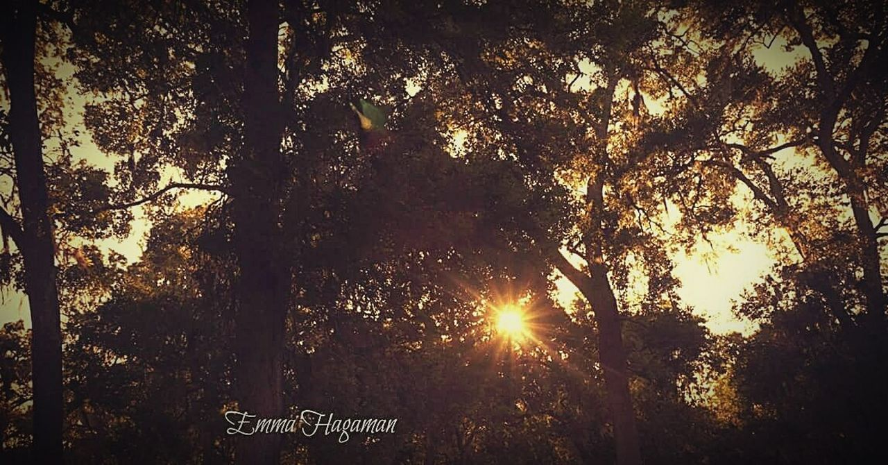 tree, sunbeam, sunlight, lens flare, sun, text, growth, communication, no people, outdoors, nature, tranquility, day, sunset, forest, beauty in nature, sky, close-up