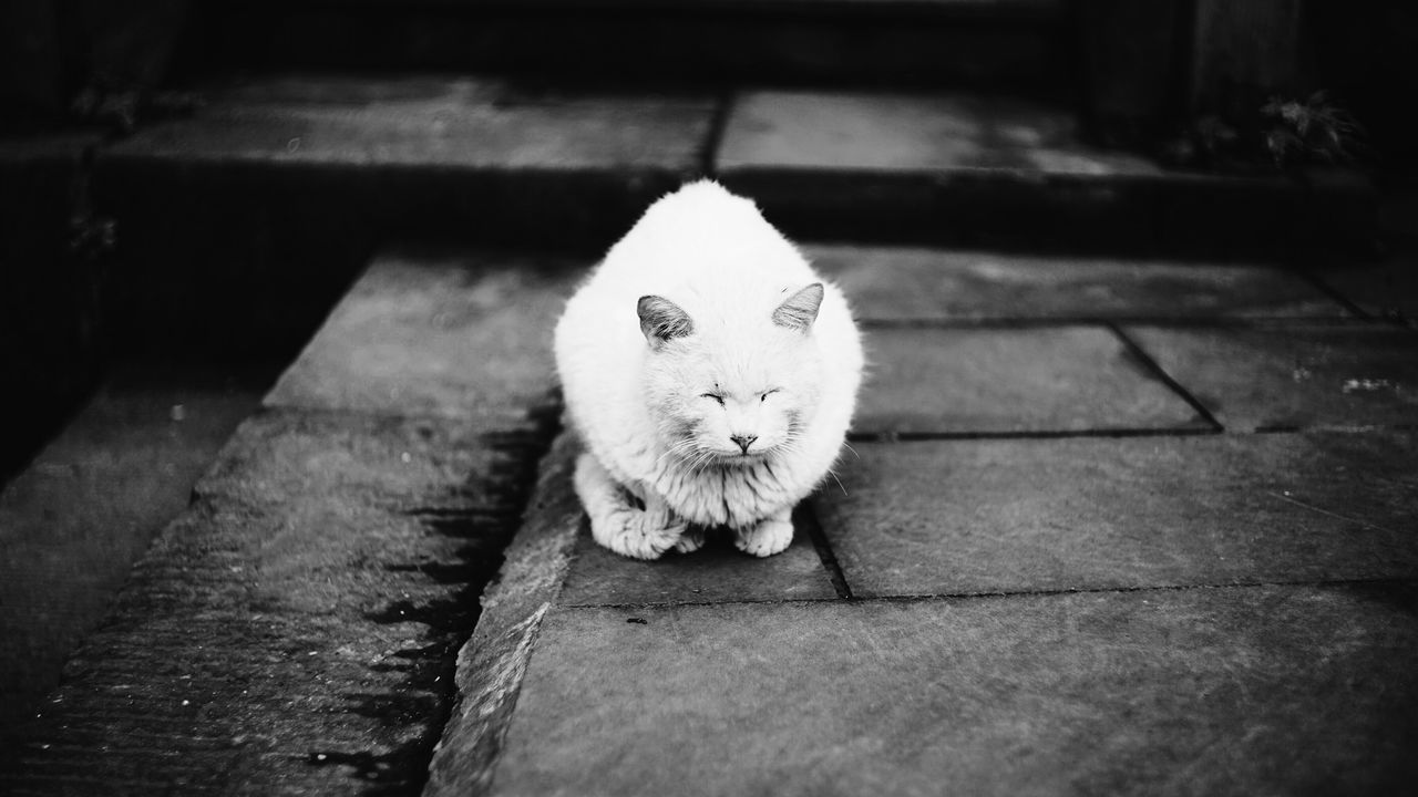 Domestic Cat Animal Themes Domestic Animals No People Cute Portrait