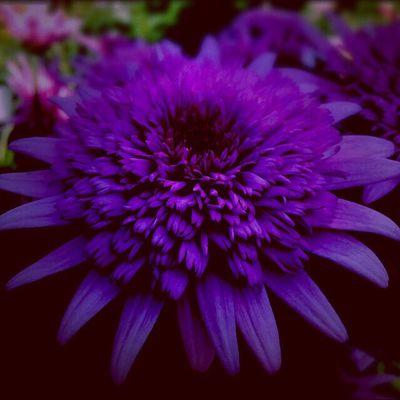 光の当たらない場所に本質がある… Flower Beauty In Nature 色のある世界 Point Of View Flowerporn