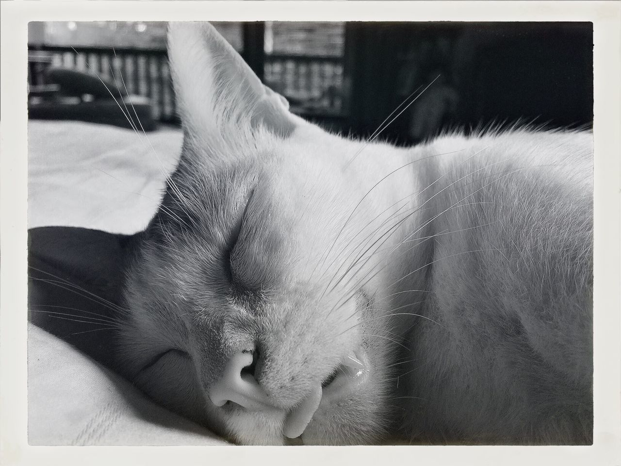 Sleeping Morning Time Cute Pets Popeye My Lovely Cat IPhoneography Blackandwhite Best EyeEm Shot Touge Out Funny Faces