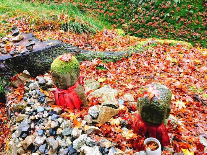 High Angle View Leaf Nature Outdoors Autumn Stone - Object No People Day Close-up Beauty In Nature Pebble Japan Photos Japan Kyoto Japanese  京都 地蔵 Jizo 秋 紅葉 Autumn Nature KAWAII EyeEm Japan