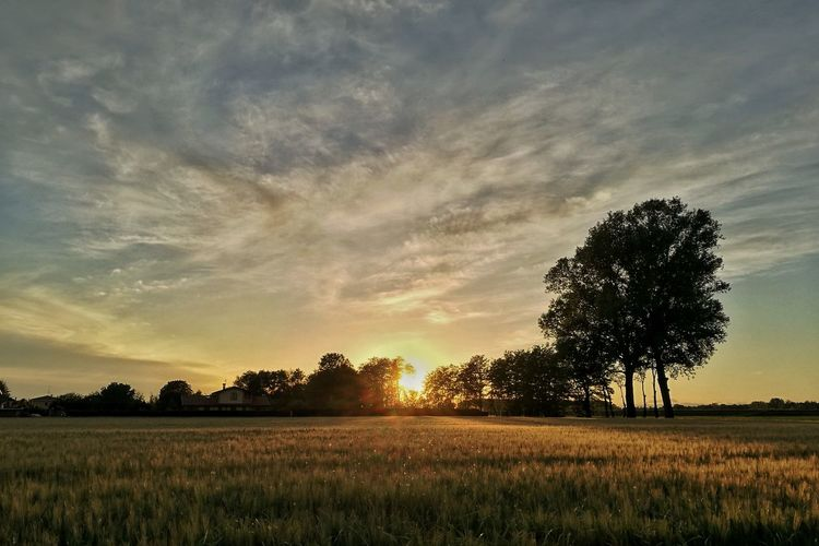 Tree Field Landscape Agriculture Sunset Beauty In Nature Nature Rural Scene Cloud - Sky Scenics No People Outdoors Sky Italia Mazzarino Oltrepo Oltrepopavese Nature Tramonto