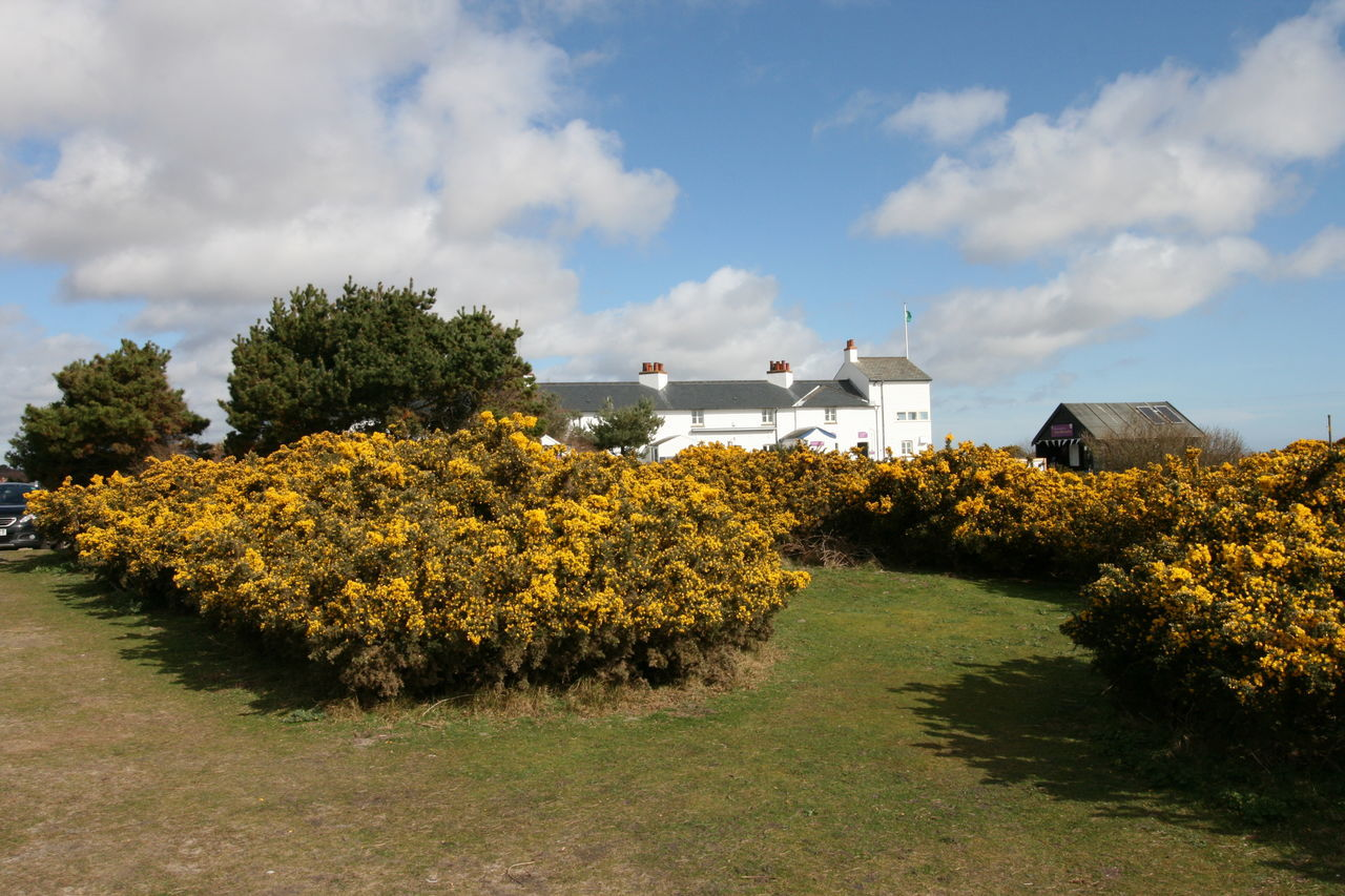 EyeEm Selects Cloud - Sky Outdoors No People Nature Dunwich Heath Dunwich Coastguard Station Gorse Flowers Gorse Bush
