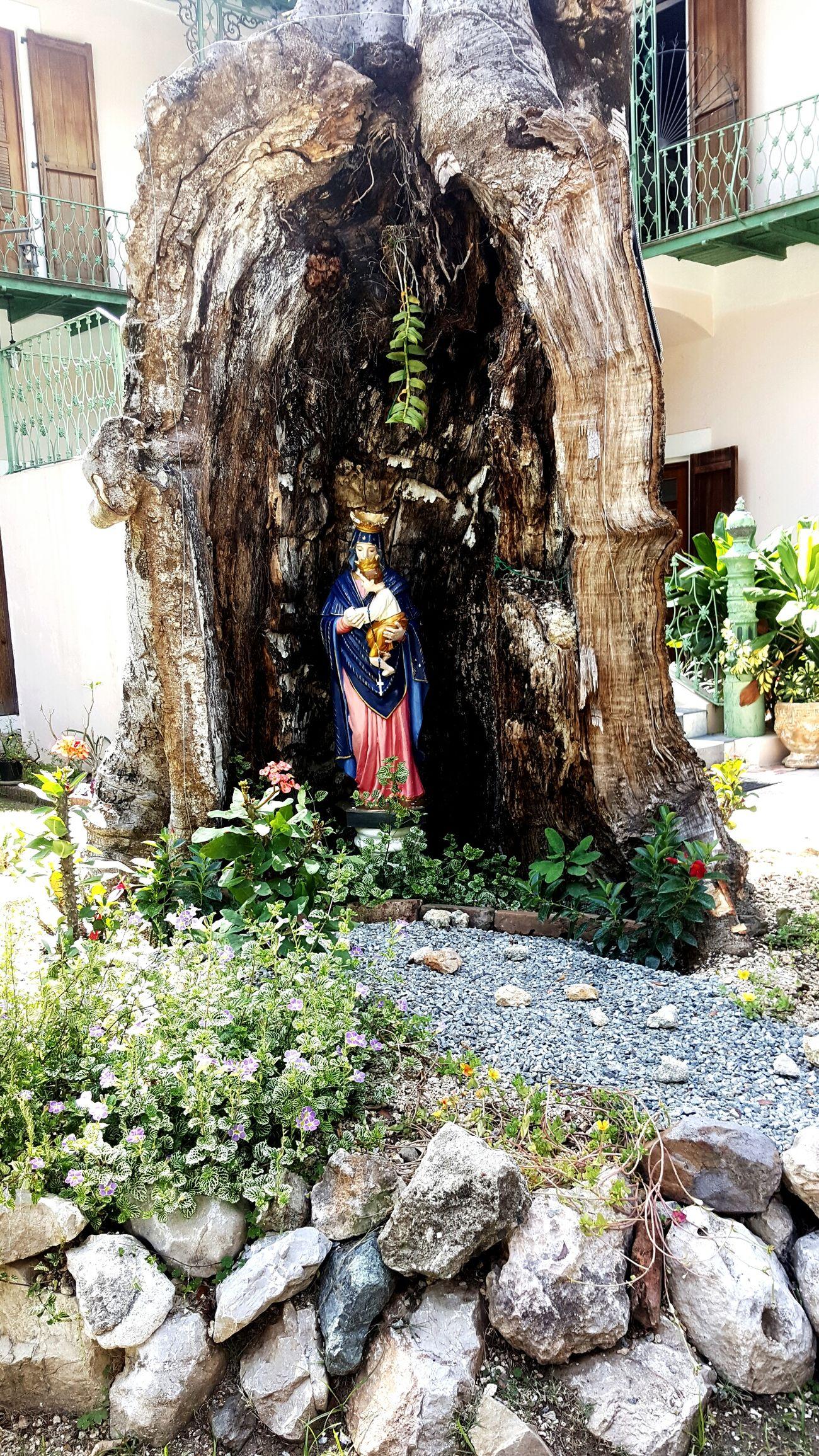 Sculpture Tree Beauty EyeEm Puerto Rico