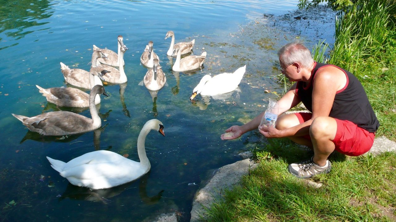Klimpi-klimperator KLIMPI KLIMPERATOR Moments Showcase: February Moments-2015 Eyeem Awards Moment Swans ❤ Schwan  Swan EyeEm Best Shots - Nature Swans Swantastic Schwanenfamilie Schwäne