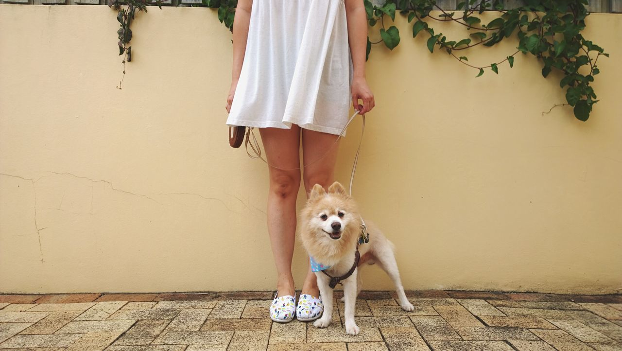 5.33pm Selfportrait | Lumia1020 Cheese! Selfie ✌ German Spitz Dog From Where I Stand Toms Toms Shoes One For One
