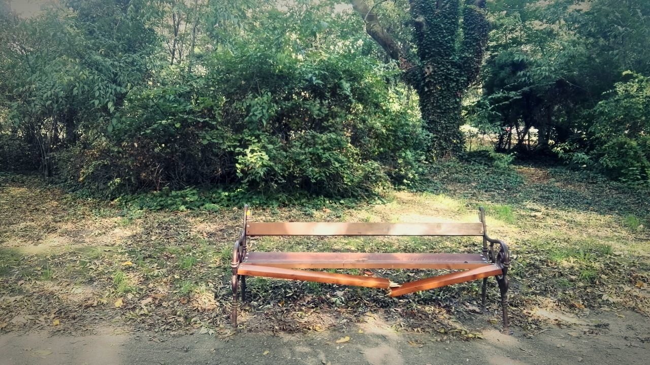 She broke my heart on that bench.No People Nature Outdoors Broken Dreams Benchlovers Benches And Branches