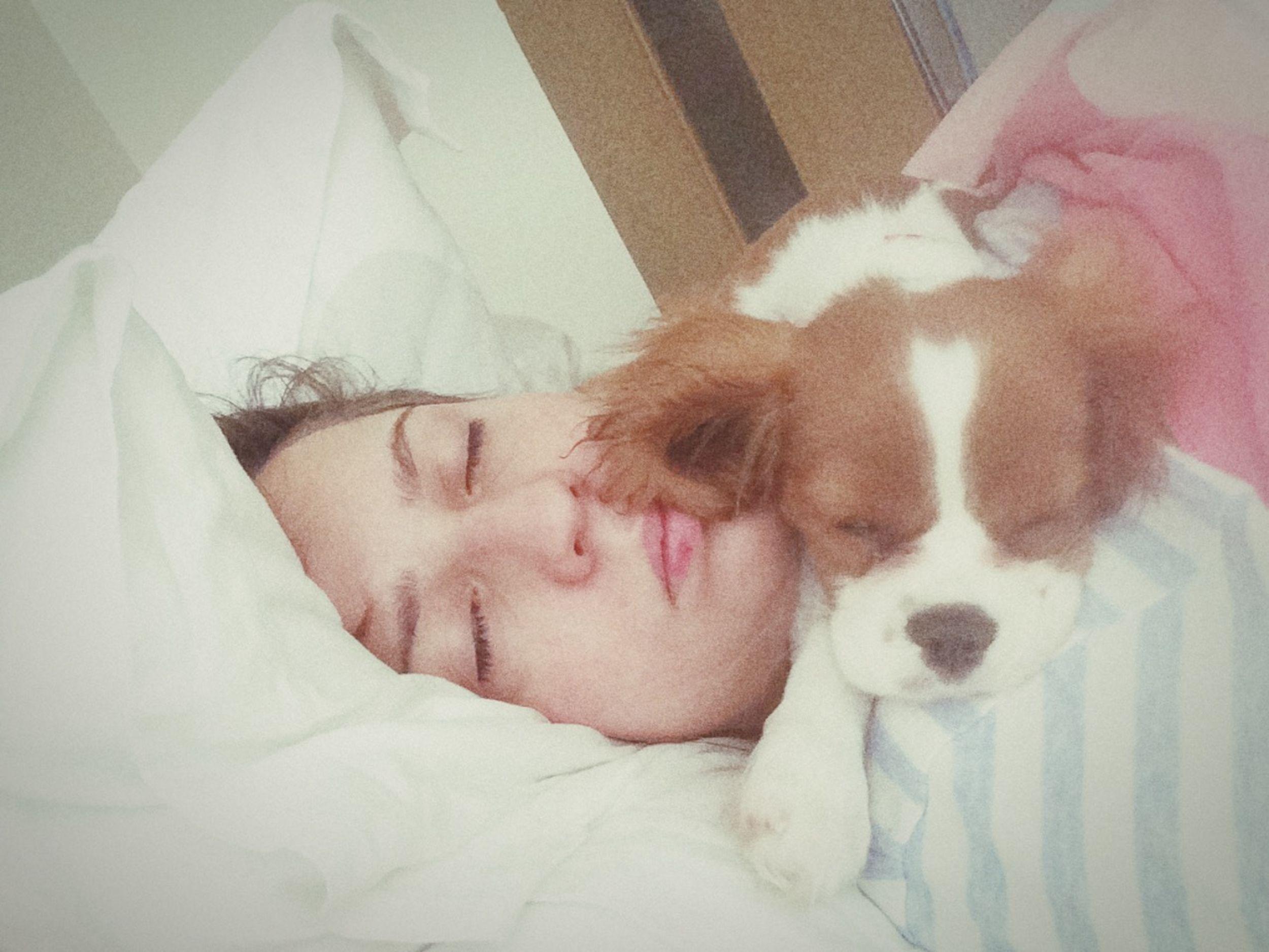 Sleepin With My Dog Dog Cute Cute Pets Cavalier King Charles Spaniel I Love My Dog that's the way we sleep.. Aha aha, we like it Relaxing